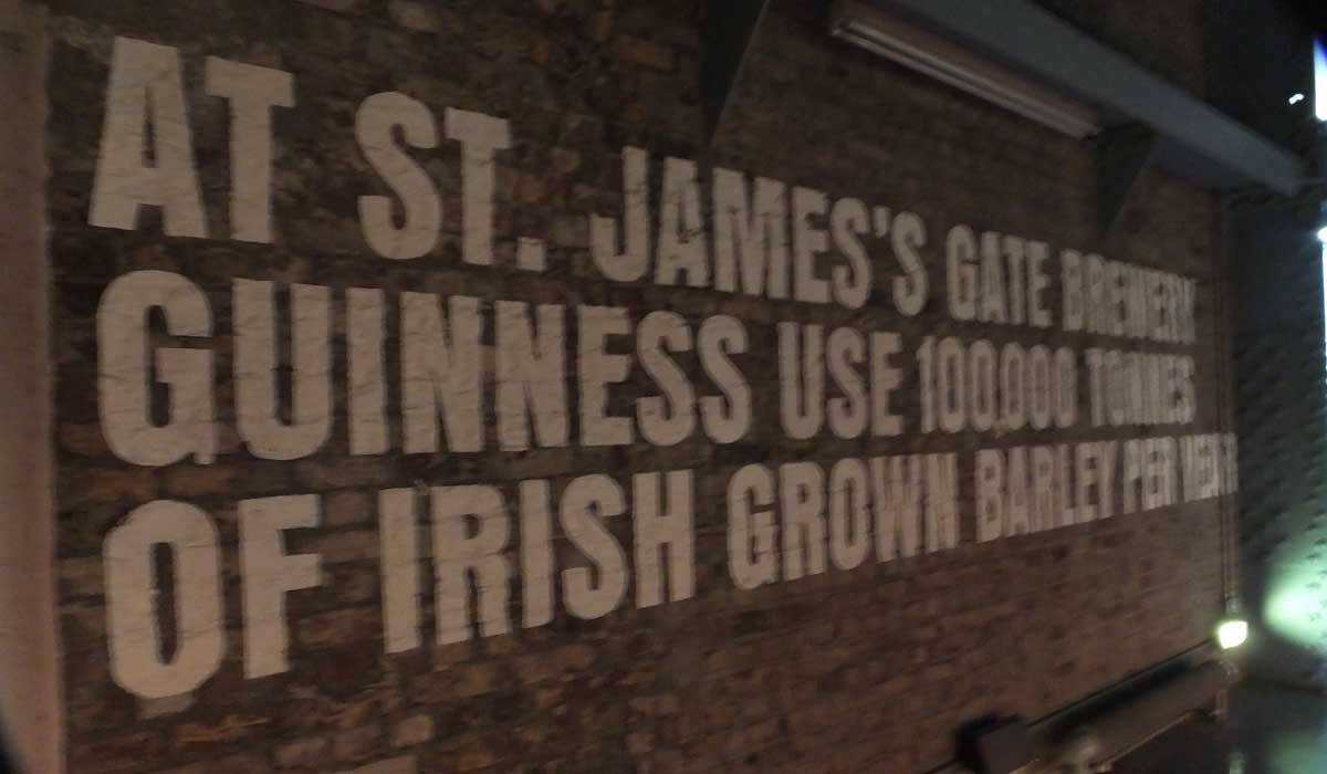 Guinness Ingredients Barley - Pikalily Food Travel Blog