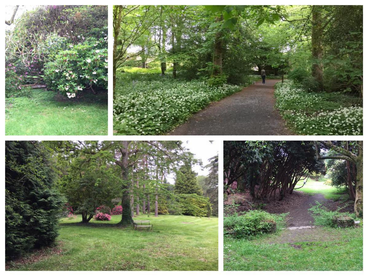 Rowallane Gardens Woodland - Pikalily Travel Blog