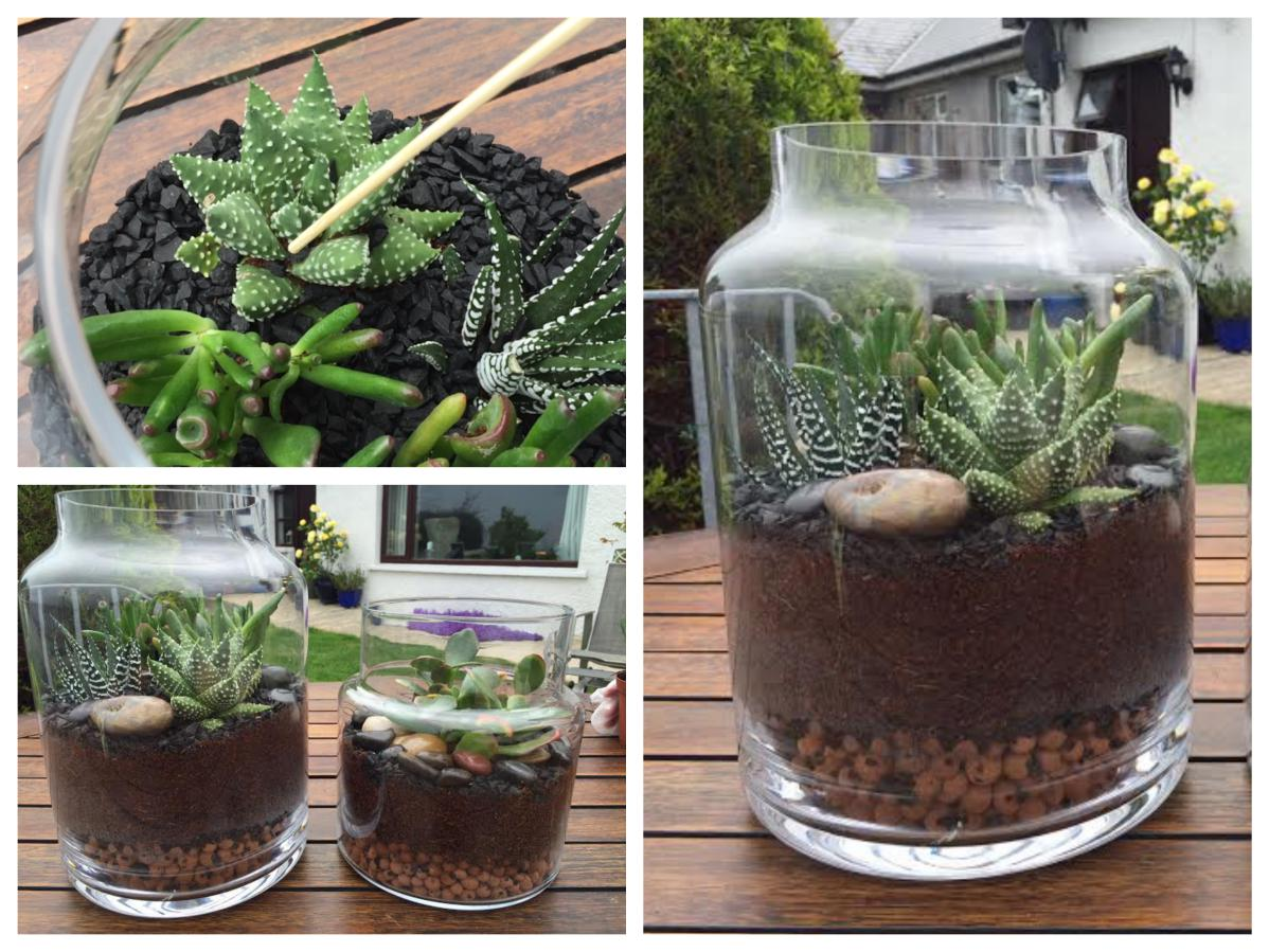 how to make a terrarium at I've fallen in love with using plants in my decor i think it all started with the paperwhite bulbs i forced at christmas those tiny white flowers gave me so m.