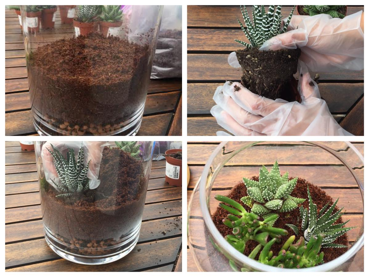 Terrarium planting - Pikalily Food Travel Lifestyle Blog